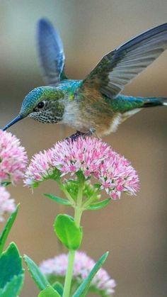 Humming bird cards flower 58 Ideas for 2019 Pretty Birds, Beautiful Birds, Animals Beautiful, Beautiful Pictures, Exotic Birds, Colorful Birds, Tropical Birds, Bird Kite, Hummingbird Pictures