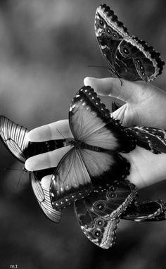 Famous Butterflys