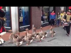 Geese Marching Band : Video Clips From The Coolest One
