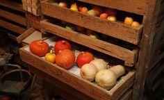Gemüse richtig lagern - Nicht alle Gemüse-Arten müssen nach der Ernte gleich eingekocht oder eingefroren werden. Viele kann man auch über Monate lagern. Vorteil: Vitamine und andere gesunde Inhaltsstoffe bleiben fast vollständig erhalten. Hier stellen wir Ihnen die wichtigsten Lagermethoden vor.
