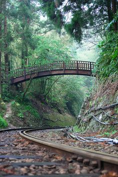 Arched Bridge over the Alishan Forest Railway, Taiwan.