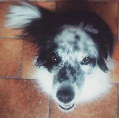 Ma buona domenica a te  Foto di: @23soni  #BauSocial  Buona domenica  #cucciola #cani_di_instagram #cani #cuddle #cane#muzzleapp#instadogs #dogs_of_instagram #dogs #instadog #dogstagram #dogofinstagram #dogoftheday #amazing #Milano #Roma #Lombardia #igersmilano #lazio #italia