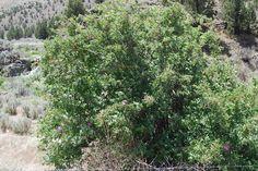Image result for wild shrubs