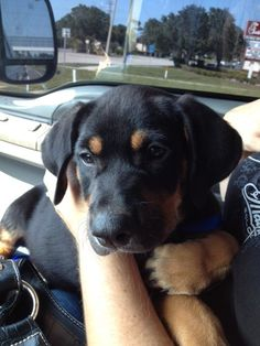 Bow was in danger of being put down when Danielle rescued him and gave him a forever home.