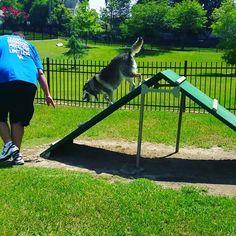 Macon Co Dog Park GA