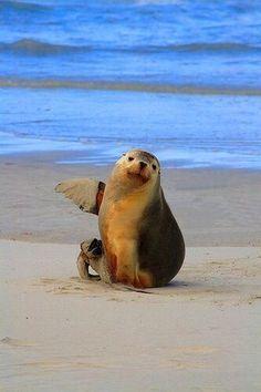 Twitter, zeehond op het strand