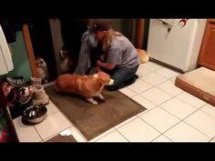 Câini disciplinați – Video – Gluma Zilei