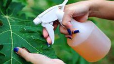 Organic Soil, Organic Gardening, Gardening Tips, Garden Guide, Diy Garden, Green Garden, Ant Problem, Household Pests, Natural Pesticides