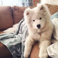 """""""And I am always ready to cuddle."""" 