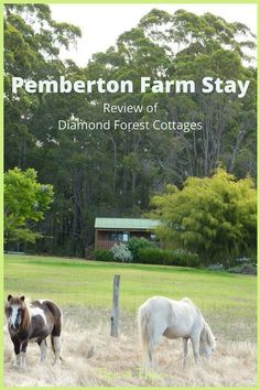 The best Pemberton f