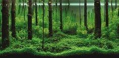 Mind-Blowing Aquariums Look Like Underwater Forests, Deserts, and Gardens | Inhabitat - Green Design, Innovation, Architecture, Green Building