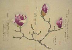 秋色波连波的相册-梅园百花画谱——春の部