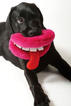 ANCOL PUPPY DOG TOY LIPS GOOFY GRINS SQUEAKY GIVE US A  KISS ! TEETH OR TONGUE !