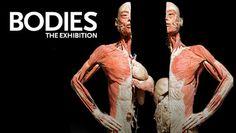 """BODIES... The Exhibition"" @ Premier Exhibition Center at Atlantic Station (Atlanta, GA)"