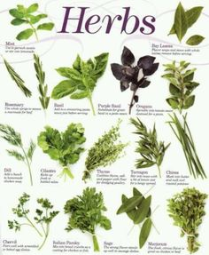 learn about herbal healing.  eventually complete a course in naturopathy