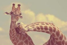 Make me smile.. Animal Love.. ♥