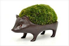 moss hedgehog