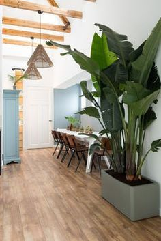 Interior Plants, Interior And Exterior, Interior Styling, Interior Design, Plant Decor, Entryway Decor, Home And Living, Diy Home Decor, Sweet Home