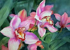 """art by anne mortimer   Cymbidium Orchid"""" by Ann Mortimer   Redbubble"""