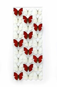 Sangaris Levels in White | Pheromone Gallery – Insect Art