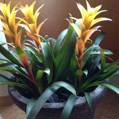 Love bromeliads