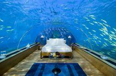 Sleep in an aquarium