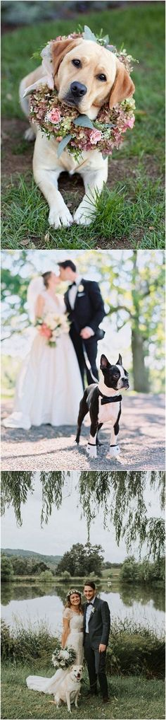 wedding photo ideas including dog with floral arrangement_2 #dogs #weddingdogs #weddingphotos #weddingphotography #weddingideas #weddinginspiration