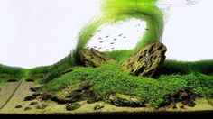 27 best aquascape design images planted aquarium aquarium ideas rh pinterest com