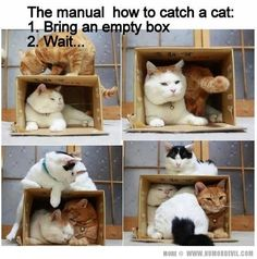 Lc- Pets For Dummies | Chapter One: How to Obtain a Pet Cat -- helpful hint: if you only want one or two be sure to use a smaller box :-)