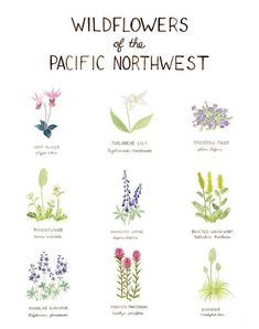 flowers drawing Pacific Northwest Wildflowers Art Print / Washington Art / Wildflowers Art / Pacific Northwest Art / Watercolor Art Print / Gifts for Her Illustration Blume, Watercolor Illustration, Watercolor Art, Watercolor Tutorials, Washington Art, Washington Tattoo, Washington State History, Plant Drawing, Drawing Flowers