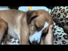 Adorable dog :: sleepyy dog - YouTube