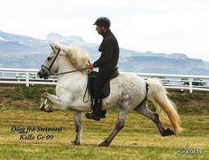 566 vind-ik-leuks, 9 reacties - Steinnes Horse Breeding farm (@steinnes.breedingfarm) op Instagram: 'Dögg frá Steinnesi✨ This photo is since 2009 - F: Hrymur frá Hofi M: Assa frá Steinnes - #tölt…'