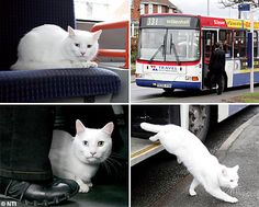 Bus drivers have nicknamed a white cat Macavity after it has started using the No 331 several mornings a week.    The feline, which has a purple collar, gets onto the busy Walsall to Wolverhampton bus at the same stop most mornings - he then jumps off at the next stop 400m down the road, near a fish and chip shop.