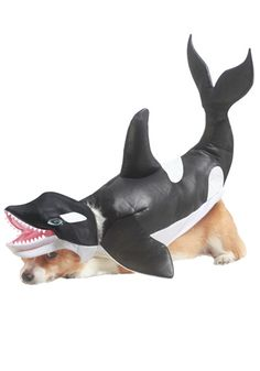Pet Orca costume #Halloween #Dog