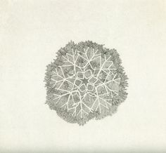 Ruth Asawa / Untitled, 1970's (ink on paper)