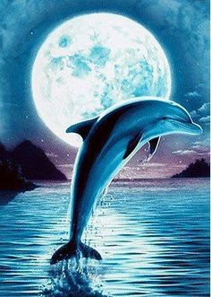 Dolphin jumping in the moonlight. Dolphin Drawing, Dolphin Painting, Dolphin Art, Photo Dauphin, Animals Beautiful, Cute Animals, Dolphin Photos, Dolphins Tattoo, Wale