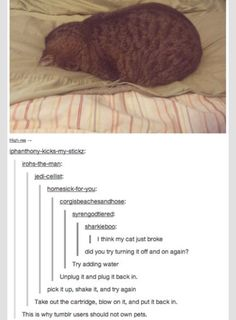 This is exactly why tumblr users should have pets
