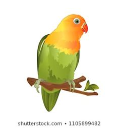 Parrot Agapornis lovebird tropical bird standing on a branch on a white background vector illustration editable hand draw Bird Stand, Tropical Birds, Seamless Background, Bird Drawings, Love Birds, Parrot, How To Draw Hands, Royalty Free Stock Photos, Paintings