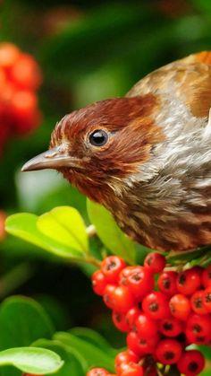 bird, beak, rowan, color