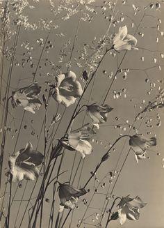 Glockenblume mit Gräsern (um 1930) - Max Baur