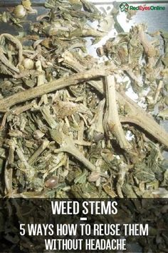 Weed Stems – 5 Ways How to Reuse Them Without Headache From RedEyesOnline.net