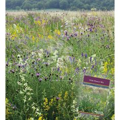 A beautiful selection of wild flowers for creating your own flower meadow.