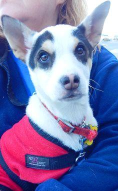 Dickson Petco Adopt-a-thon February 2016 Last Chance Pet Rescue (lastchancepetrescue-dickson@yahoo.com)