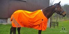 Don't Shoot Me, High visibility wear for the protection of horses, dogs, and riders