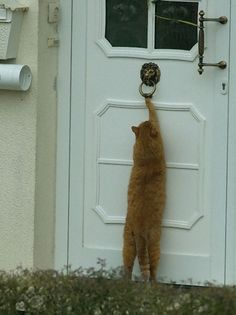 ♥ knock-knock anybody home?