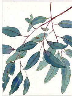 rhubarbinthegarden, controsensi