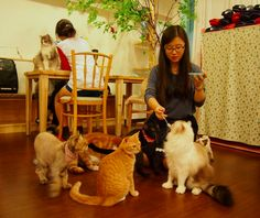 The Cat Cafe in Seoul!  This amazing cafe is near my home in Seoul, Korea.  Sit down, grab a coffee, and be entertained by the dozens of cute cats wandering around this cafe.  I am allergic to cats, so I could only stay in here for 5 minutes, but it was pretty awesome!