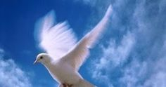 The Lope family is very greatfull for any amount, no matter how small or large… Mary Ellen Jimenez needs your support for In loving memory of: Mercedes Lopez Dove Pictures, Dove Images, Image Jesus, Paz Interior, Prophetic Art, Soul Healing, White Doves, Dalai Lama, Go Fund Me