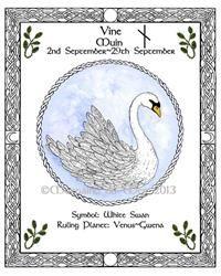Celtic Lunar Astrology Zodiac Sign Art Prints Druid Tree Lore by Morgaine du Mer Celtic Zodiac Signs, Celtic Astrology, Astrology Zodiac, Horoscope, Celtic Tattoo Symbols, Celtic Tattoos, Venus, Bear Spirit Animal, Celtic Animals
