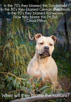 Blame the humans...  Cesar Milan....